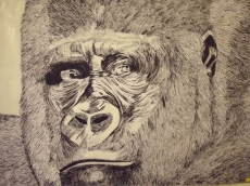 Dessin Gorille de Tavar