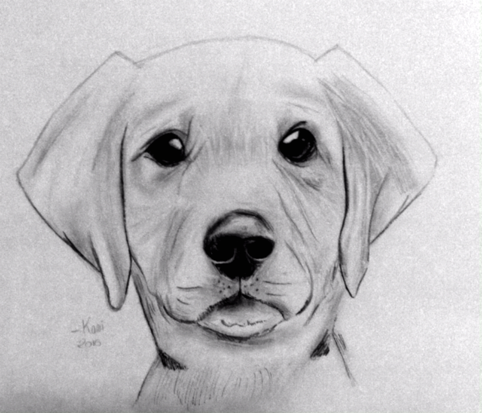Pencil drawing pictures posters news and videos on - Dessins de chien ...