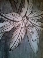 Dessin Fleur de Princesserosia