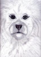 Dessin Portrait animalier de Princesserosia