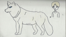 Dessin White Wolf de Pykanchan