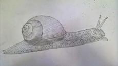 Dessin Escargot de BridaKagamiku