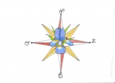 Dessin Iris des vents de Sandhime