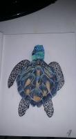 Dessin Turtle de NanouD4558