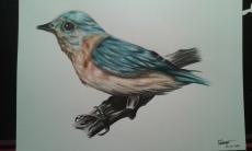 Dessin Oiseau de Bubulle23
