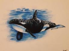 Dessin Orque de Bubulle23