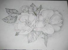 Dessin Fleurs printanières de Judith