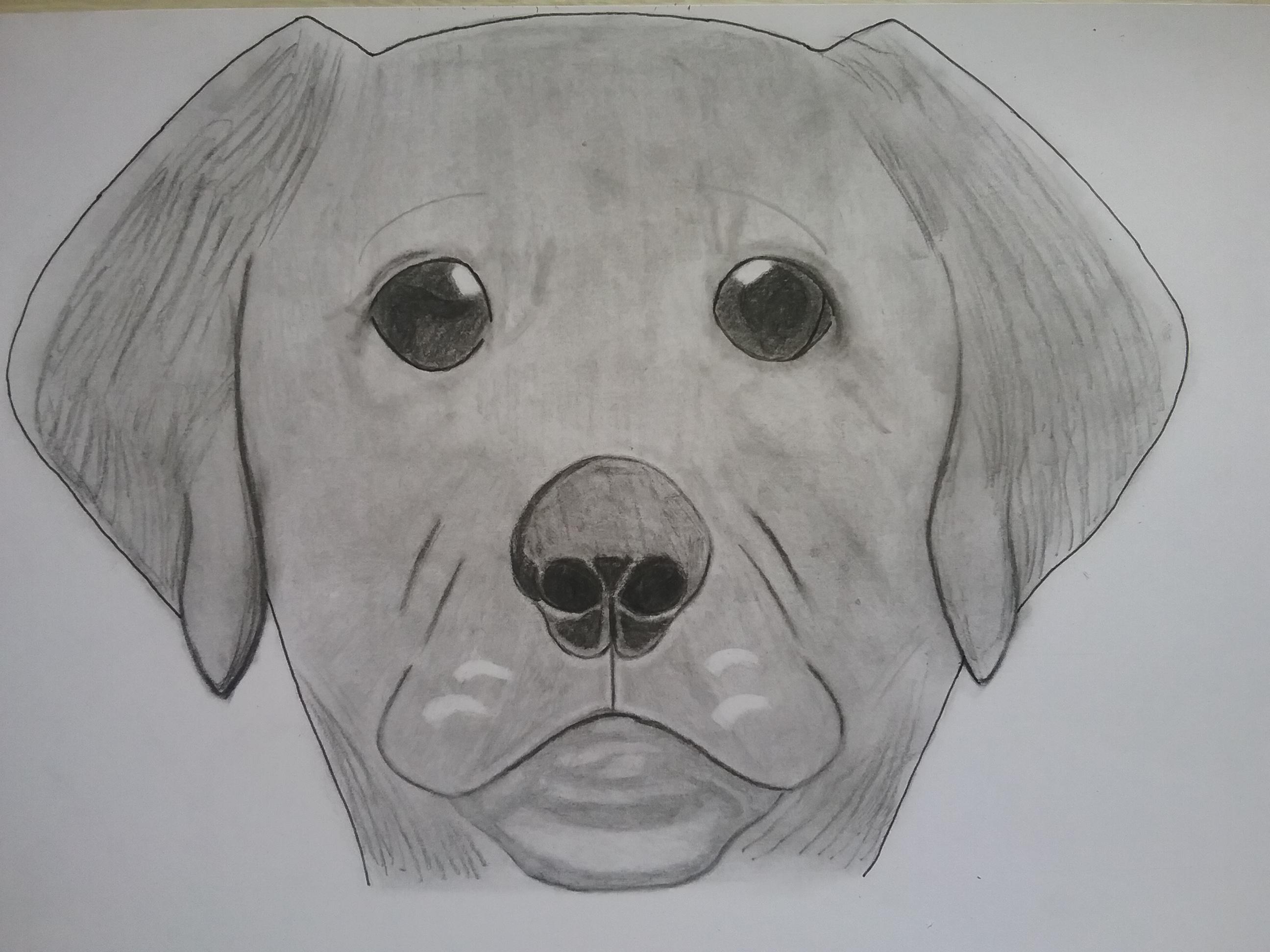 Dessin Portrait de petit chien de ArtExpoDrawings