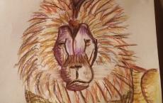 Dessin Lion au pastel sec de Lola27
