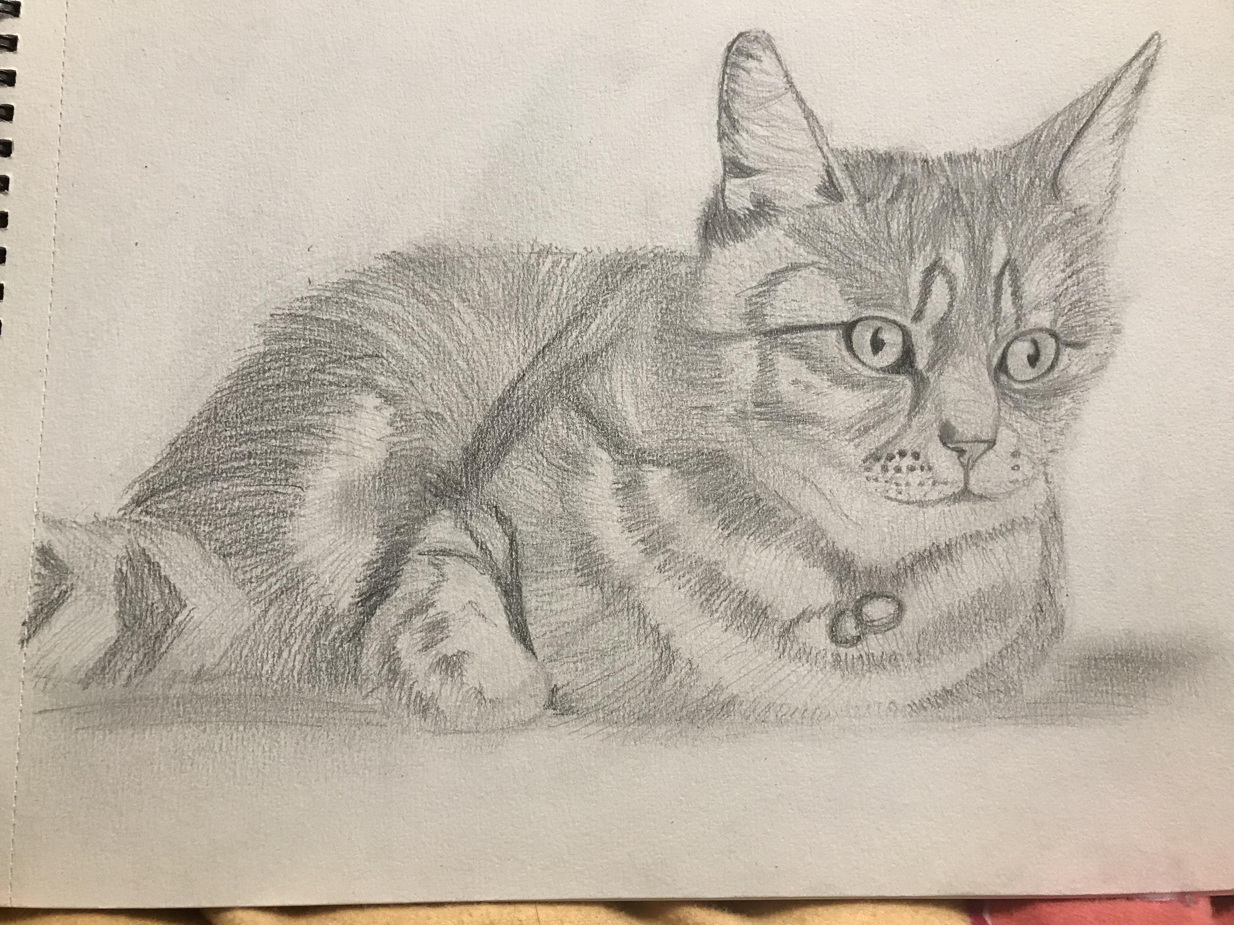 Dessin Dessin d?un chat de Maeva