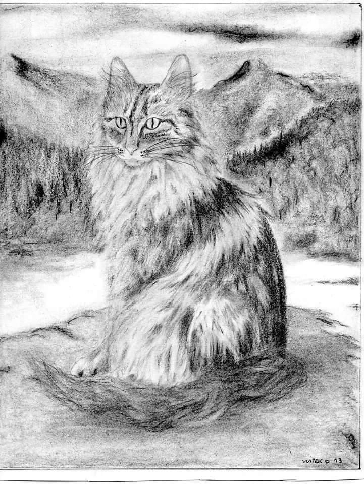 Dessin Le chat de DavidW