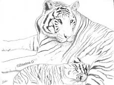 Dessin Tigresse et son tigron de Zibeline