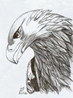 Dessin Aigle de Patoux