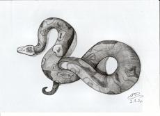 Dessin Serpent de Patoux