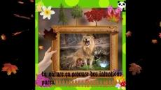 Dessin La nature et le lion dans sa splendeur. de Master