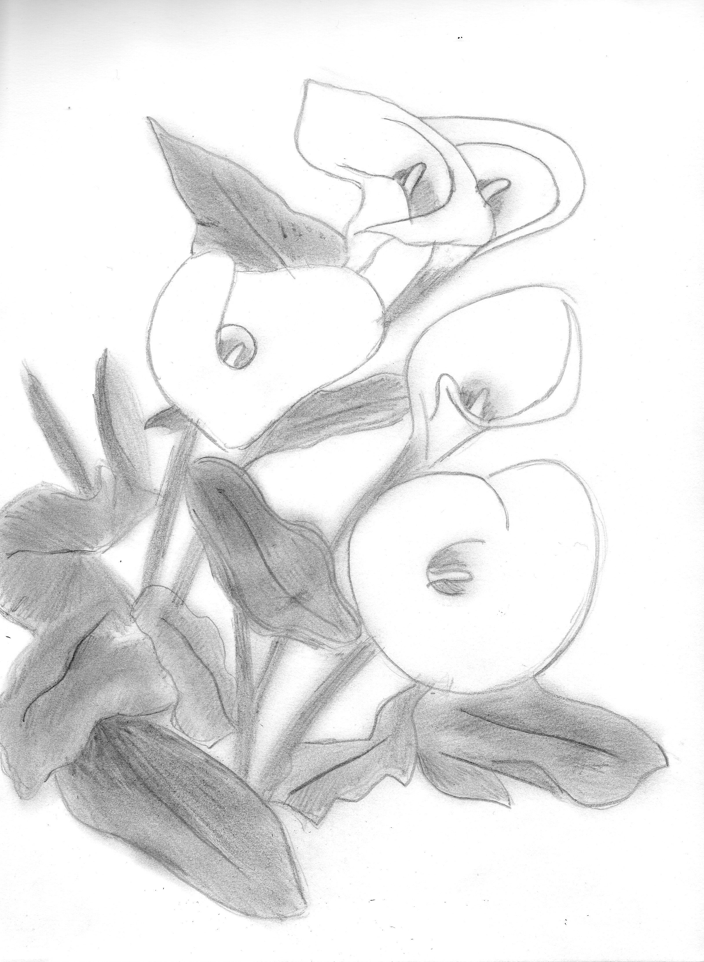 Dessin Bouquet de arums de Captainred